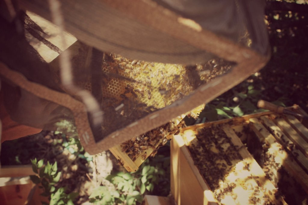 bees 034