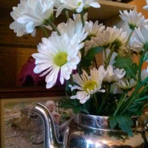 daisies_folkwaysfarm